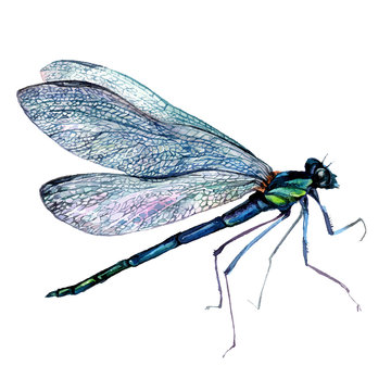 Watercolor Green Dragonfly