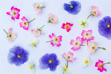Floral summer background on white background