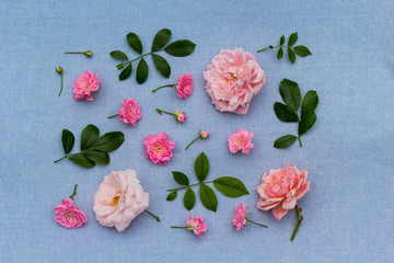Beautifu, romantic, floral background with pink roses on blue, fabric background