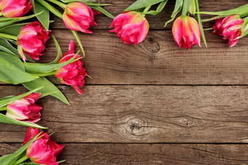 Corner border of pink tulip flowers against a rustic dark wood background with copy space