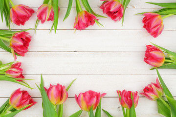 Frame of pink tulip flowers against a white wood background. Copy space.