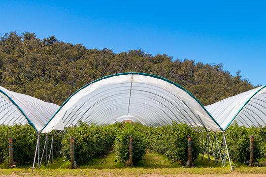 Berry farm Tasmania Australia