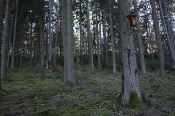 Nest box inside a forest out of conifers