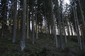 Pure forest landscape in the mountains