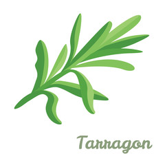 Tarragon isolated on white background. Vector illustration of green fragrant estragon in cartoon simple flat style.