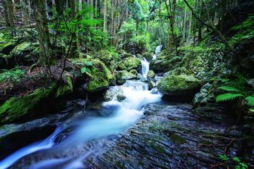 写真素材:渓流、渓谷、山中、山奥、日本、雨乞いの滝