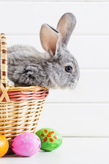 Easter bunny with eggs on white background