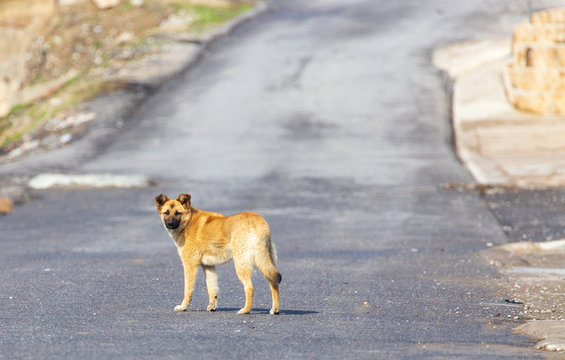 The dog walks on the road