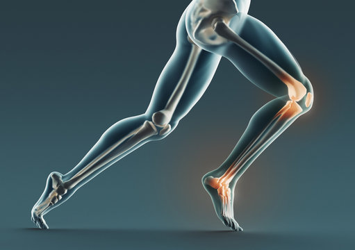 Human legs and bones, x ray, 3d rendering