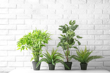 Potted plants on table near brick wall. Interior decor