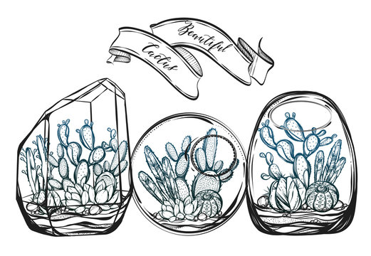 Beautiful cactus in terrarium. Vector illustration. Set cactus. Handmade, set of plants, prints on T-shirts, tattoos, postcard for you, background white, Dark green blue color