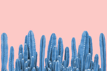 Blue cactus on pink background