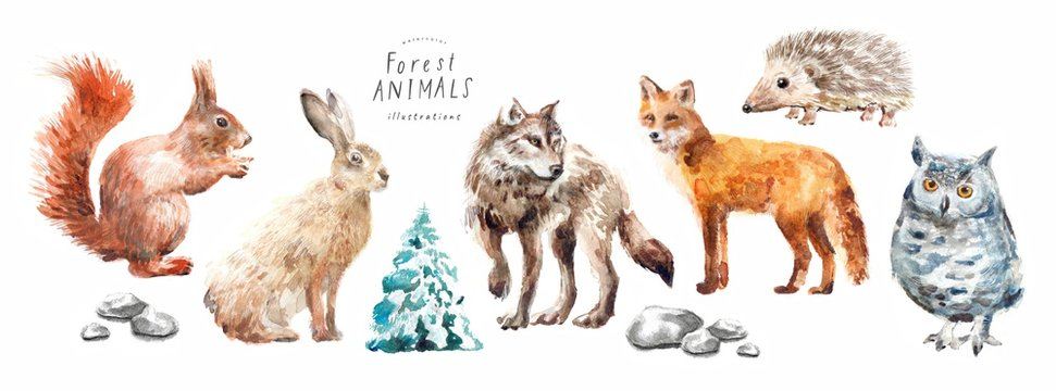 Watercolor illustrations of forest animals: hare, wolf, fox, hedgehog, owl, squirrel, spruce, isolated freehand drawings