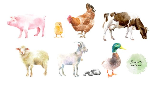 Watercolor illustrations of domestic animals: pig, chicken, chicken, cow, ram, goat, duck, isolated drawings by hand