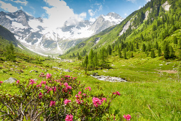 Fototapete - Frühling im Hochgebirge von Tirol
