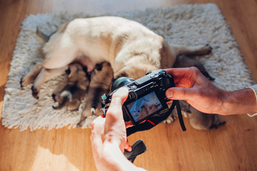 Man taking pictures of pug dog feeding six puppies at home. Master using camera to film footage