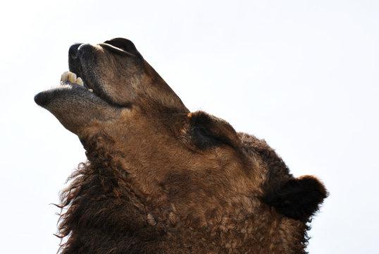 Camel-Disambiguation