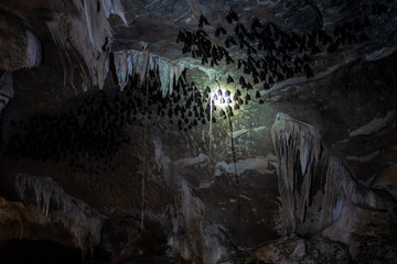 A batcave at the Kilim Karst Geoforest Park in Langkawi, Malaysia.