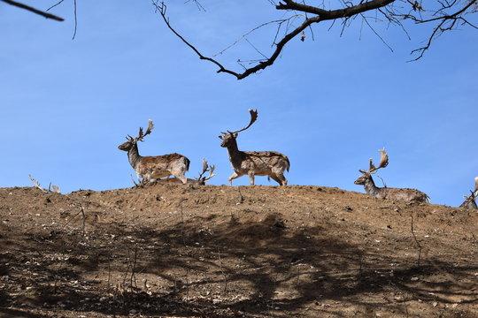 Deer sky