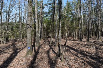 Nester Trail in Trace State Park, Mississippi