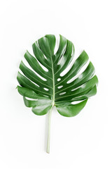 Tropical leaf Monstera on white background. Flat lay, top view