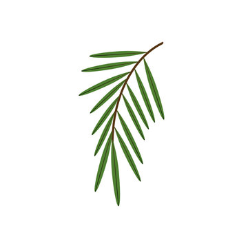 A branch of a palm tree. Vector illustration.