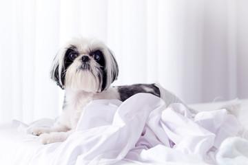 Cachorro em cima da cama com lençol