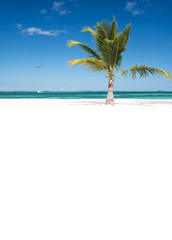 Fototapete - One coconut palm tree on tropical sandy beach