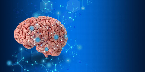 human brain on blue background
