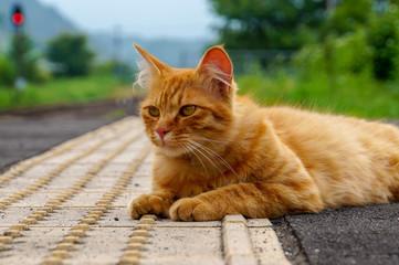 のら猫・モデル