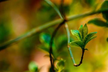Bourgeon vert avec fond vert