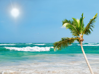 Beautiful seascape with the sun, a palm and turquoise water