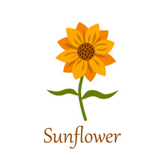 Sunflower with title isolated on white background