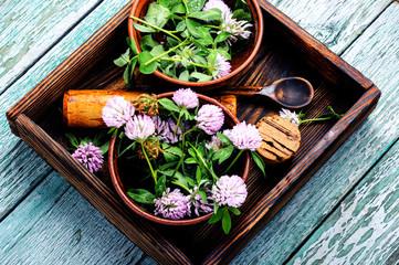 Clover in herbal medicine
