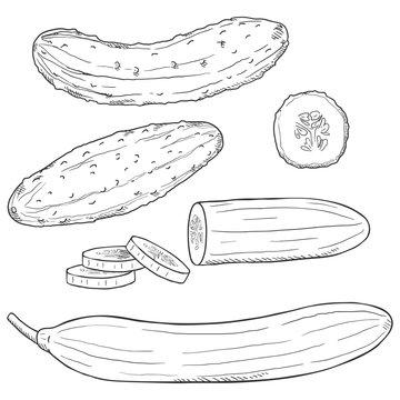 Vector Set of Sketch Cucumbers.