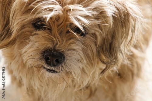 Letzte Erinnerung Treuer Hund Stockfotos Und Lizenzfreie Bilder