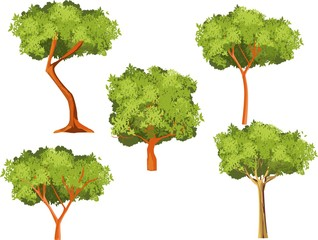 Vector trees set isolated on white vector