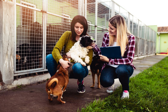 Young woman with worker choosing which dog to adopt from a shelter.