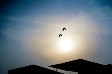 Amazing flight of two Pigeons, twin doves making a perfect move