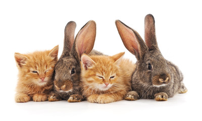 Red kittens and rabbits.