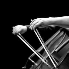 Fototapete - The hands of a musician playing the cello in black and white tones