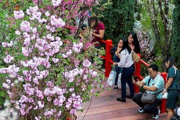 Visitors react as a man squats to take pictures of cherry blossoms and surrounding foliage during the Sakura Matsuri Floral Display at Gardens by the Bay in Singapore