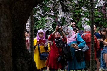 Women review and take pictures of cherry blossoms with their smartphones during the Sakura Matsuri floral display at Gardens by the Bay in Singapore