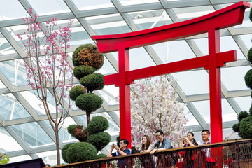 People take pictures and enjoy the view under a faux torii gate during the Sakura Matsuri floral display at Gardens by the Bay in Singapore