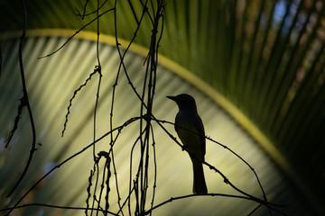 bird in costa rica