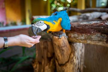 Parrot at Langkawi Wildlife Park