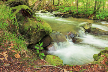 bank of the forest river. beautiful summer nature scenery. trees and mossy boulders on the shore of a stream. long exposure