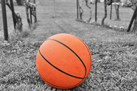 orange basketball on meadow, black and white colored image
