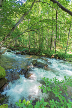 bank of the forest river. beautiful summer nature scenery. huge rocks form a cascade on the creek. twigs hang above the flow. trees and mossy boulders on the shore line. long exposure. view from above