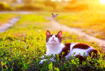 Tuinposter Kat portrait of a cute striped cat lying in the grass in a Sunny meadow and looking at a beautiful little blue butterfly flying overhead on a clear summer day in the village